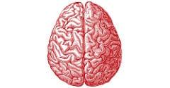 14599057094_8e82e0e482_m_adolescent-brain-image